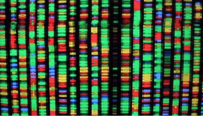 Epilessia, Un Progetto Per Avviare Una Nuova Ricerca Genetica