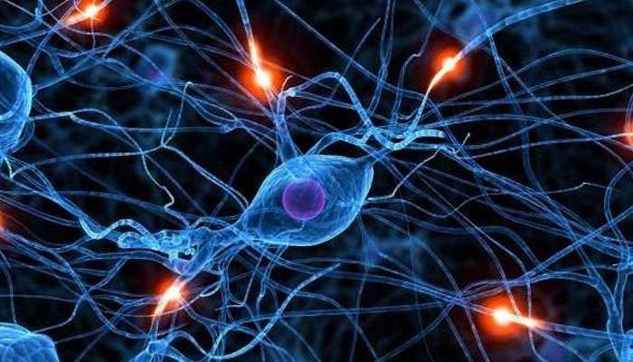 Dalla Talidomide Una Speranza Per L'infarto Cerebrale