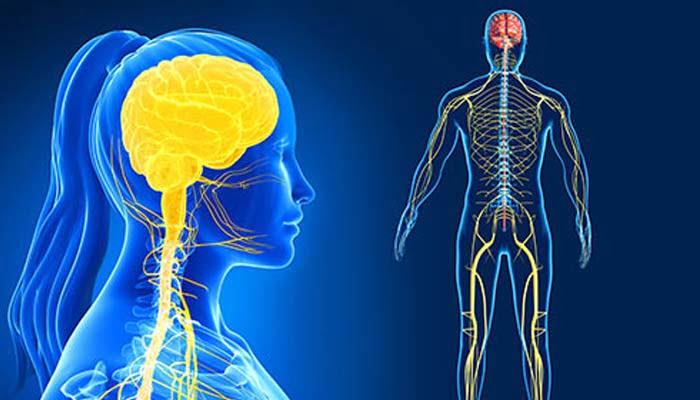 Sclerosi Tuberosa. L'impatto Sul Sistema Nervoso Centrale