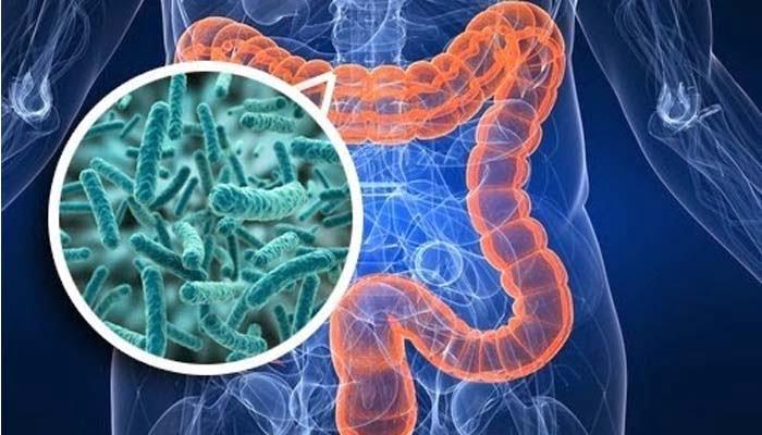 L'importanza Del Microbioma Nella Suscettibilità Alla SM